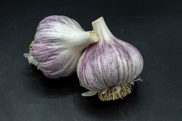 Picture of Persian Star Garlic from Calico Blossom Farm
